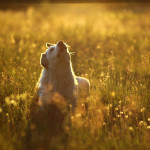 Animals photography Austeja Liu photography