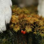 Animals photography Austeja Liu photography